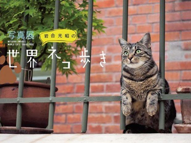 世界中のにゃんこ大集合! 写真展「岩合光昭の世界ネコ歩き」開催