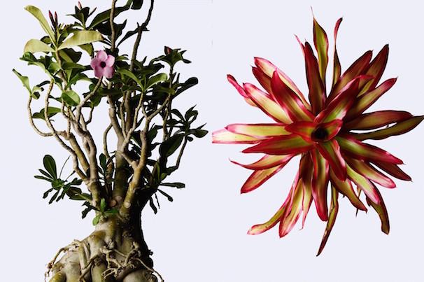 「ウルトラ植物博覧会」1
