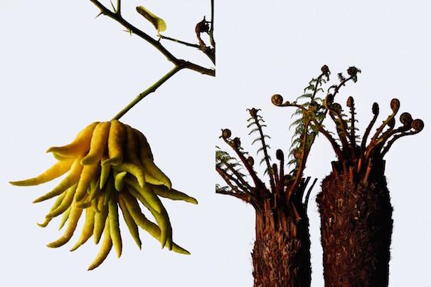「ウルトラ植物博覧会」2