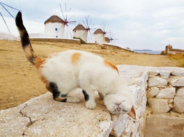 池袋で岩合光昭の写真展「ねこ歩き」開催! 大規模なネコグッズも展開