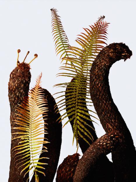 「ウルトラ植物博覧会」 世界中の希少植物を集めたプラントハンターの展覧会