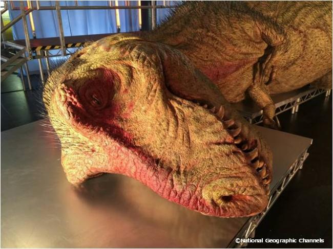世界初ティラノサウルスを解剖再現 制作はスター・ウォーズ ジャバの生みの親