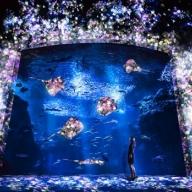 お泊まりにビアガーデン! この夏、絶対行きたい水族館イベント8選