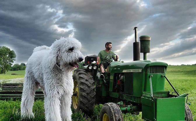 フォトショで巨大化した愛犬が超ファンタジー もっふもふで癒される…