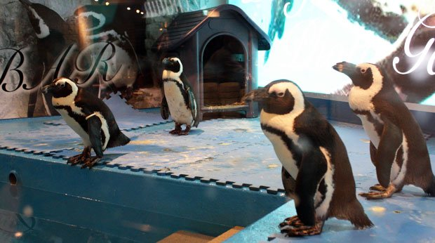 仕事中だったけど、池袋の新名所「ペンギンのいるBAR」に行ってきた!