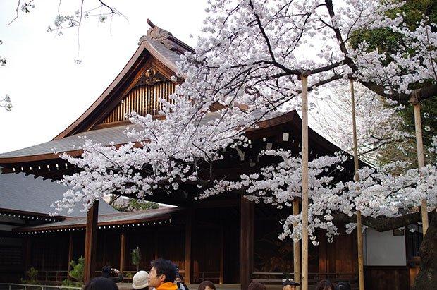 桜は今が見頃! ゆったり楽しむ都内のお花見穴場スポット5選