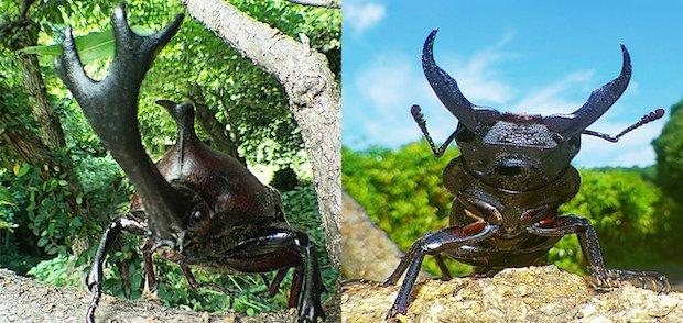"""世界初""""アリ目線""""で昆虫世界に迫る! 3D映画『アリのままでいたい』"""