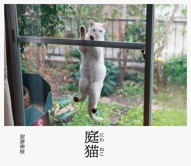 家の窓に飛びついて覗いてるにゃん… 写真集「庭猫」が癒される!