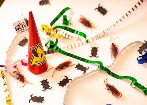 【閲覧注意】リアルなゴキブリが飛び出すクラッカーが商品化