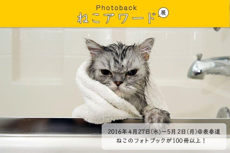 猫の写真集 No.1決定戦「ねこアワード展」 GWはネコにまみれたい…