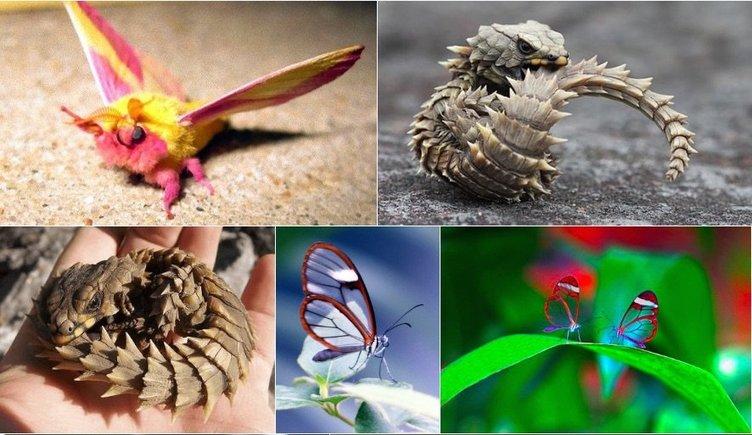 「#秘密にしておきたかった生き物」 Twitterに神秘の生き物が大集合