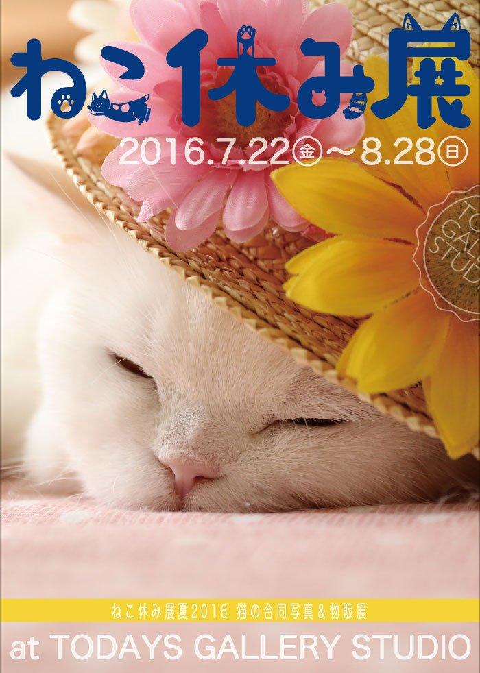 にゃんこに癒される最高の夏「ねこ休み展」 SNSでなごむ猫たちの集会