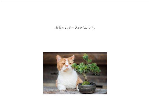 『ふてニャン写真集 ふてやすみ』2