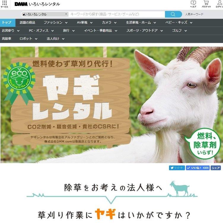 「DMMヤギレンタル」1頭15000円で草刈り代行 その働きっぷりは?
