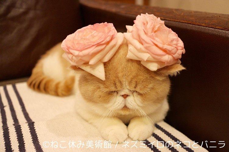 「ねこ休み美術館」 SNSで人気の猫が世界の名画やアート作品とコラボ