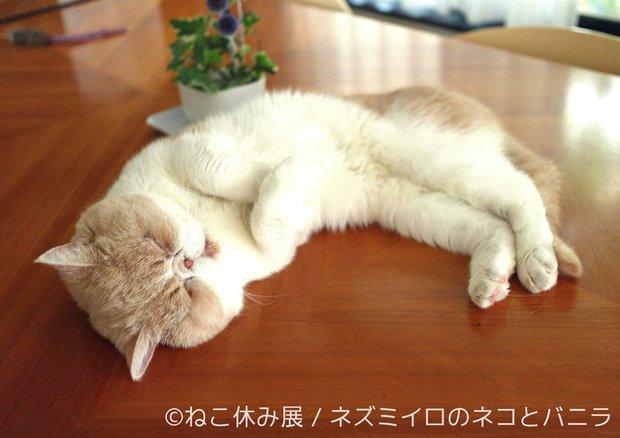 「ねこ休み展」9