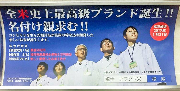 この米で福井県も強く輝く!? 賞金50万円、新ブランド米の名前募集
