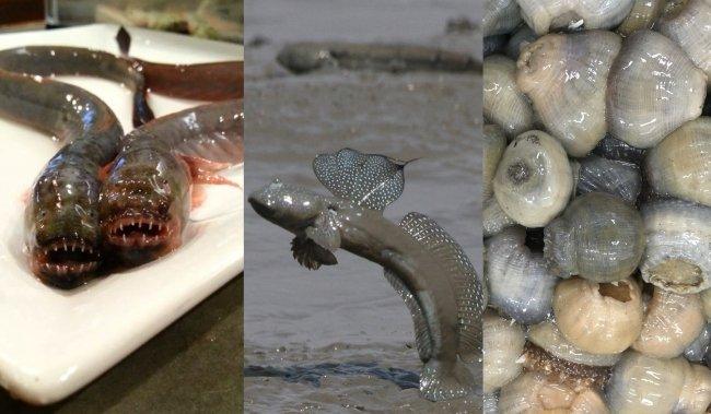 ムツゴロウ、ワラスボを餃子で食う! 佐賀県が「珍魚苑」を展開