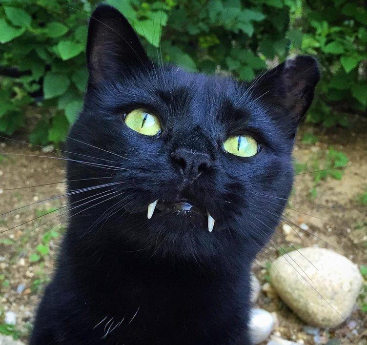 牙のある姿はまるで吸血鬼 Vampire Catのインスタがネコ好きには堪らない