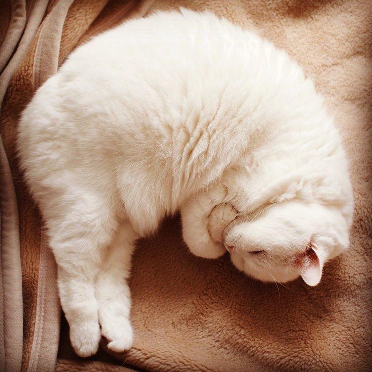 冬に感じたい、猫のもふもふ毛並み! 最高にPOPなペット画像まとめ