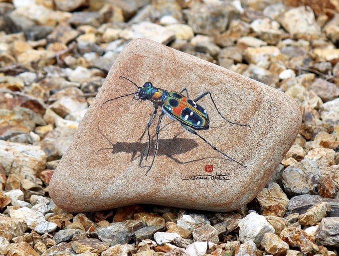 石に描かれた躍動感溢れる生き物たち 繊細で美しい作品に息を呑む