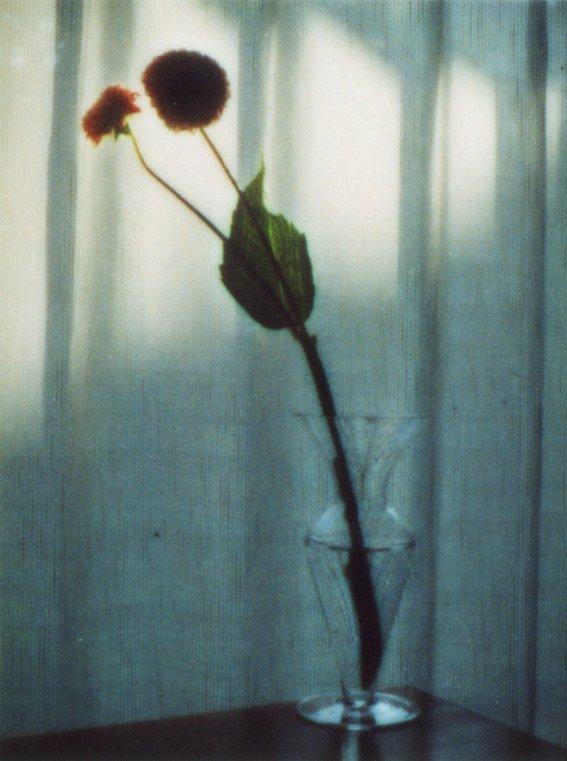 """奥山由之×edenworks Exhibition  """"flowers"""""""
