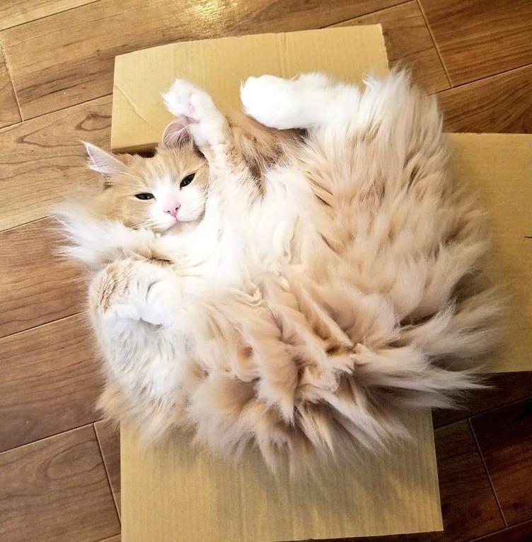 この猫、でんきタイプじゃね…? 静電気でスパークした姿がポケモンみたいで尊い