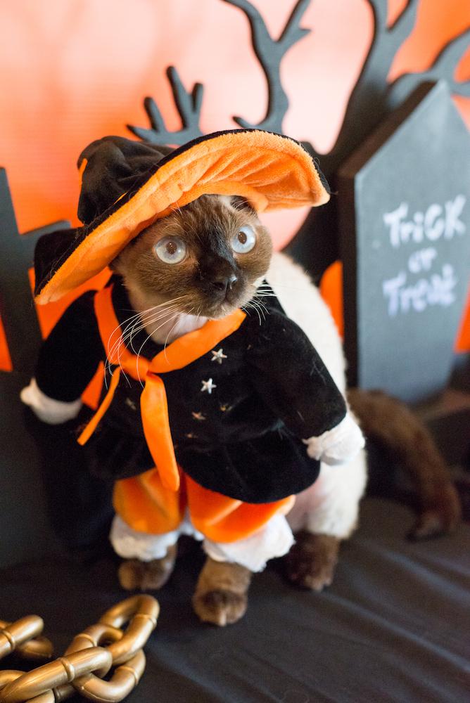 【写真】猫と過ごすハロウィン最高 仮装したニャンニャンに笑みが止まらない