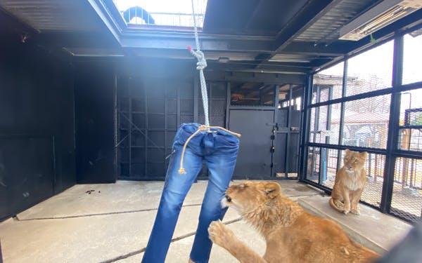 ライオンダメージジーンズ...? 動物園ならではのユニークなアイテム