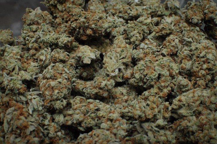大麻が国際条約の「最も危険な薬物分類」から削除 53ヶ国の投票で可決