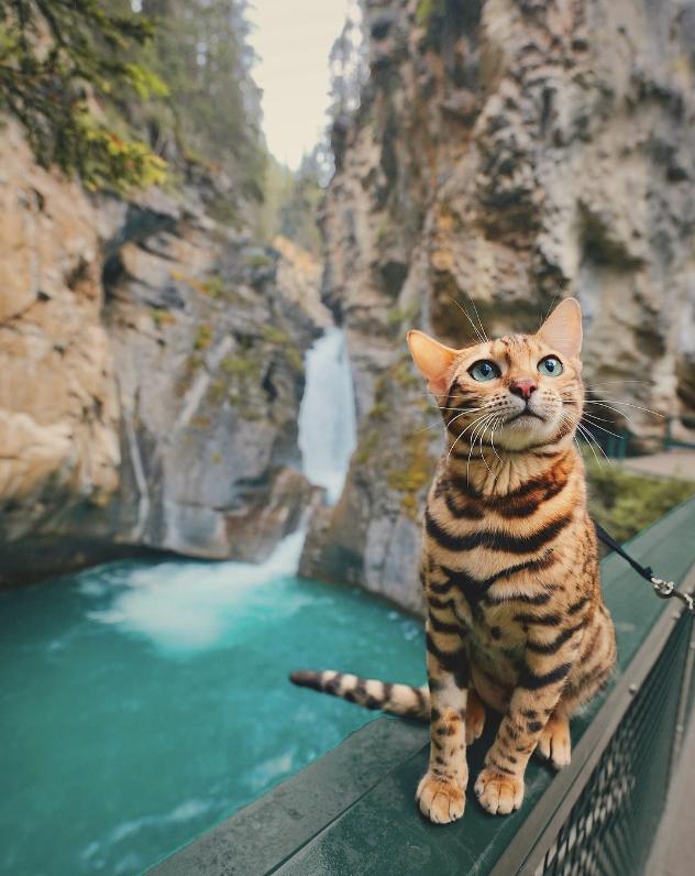 冒険ネコこと「Suki The Cat」が神秘的な美しさ そのたたずまいに吸い込まれる