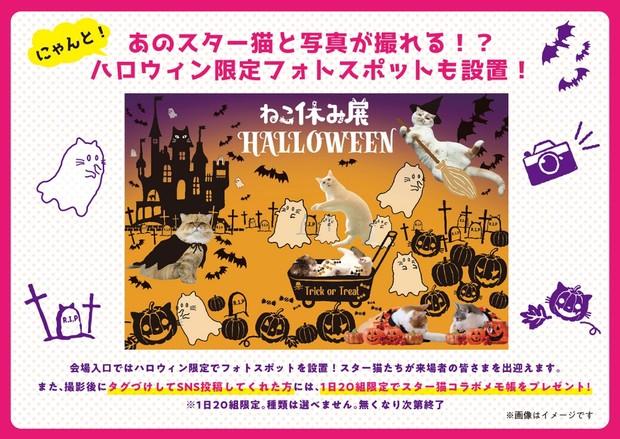 (C)ねこ休み展in大阪 / フォトスポット