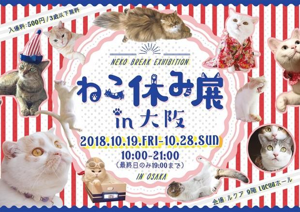 ねこ休み展in大阪