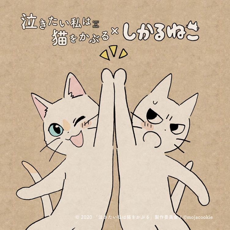 映画『泣き猫』応援隊長に「しかるねこ」就任 かわいすぎるハイタッチ!