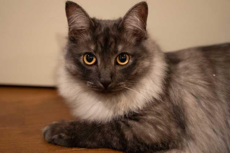 【検証】ニャにが言いたい? 猫語の翻訳アプリ『ニャントーク』使ってみた