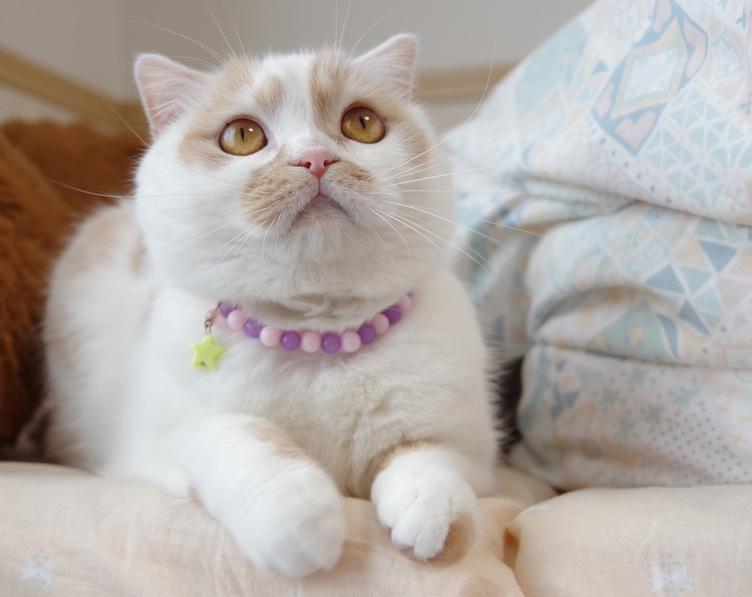 「ねこ休み展」が2年ぶり札幌で スター猫たちの可愛すぎる作品250点