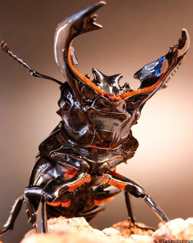 躍動感溢れるクワガタに惚れ惚れ! 昆虫写真家「ムシキングに出会わなければ撮れなかったかも」