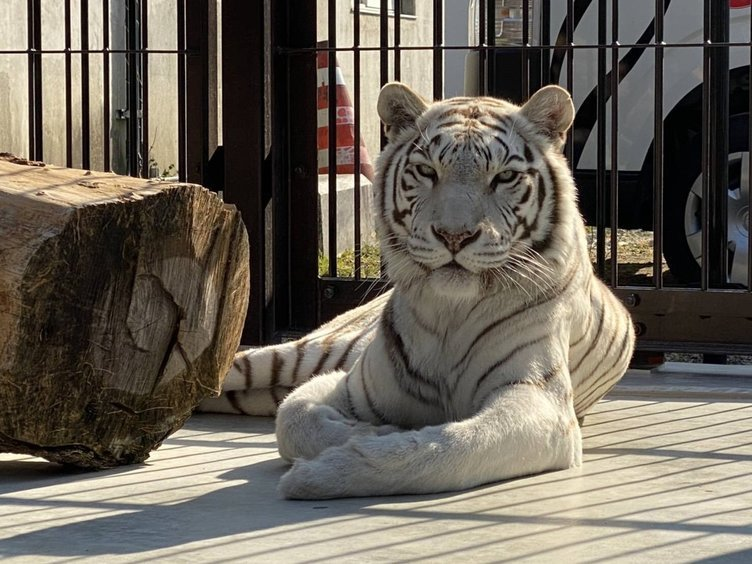 ASMRの新境地 動物のワイルド咀嚼音を東武動物公園がLINE MUSICで配信