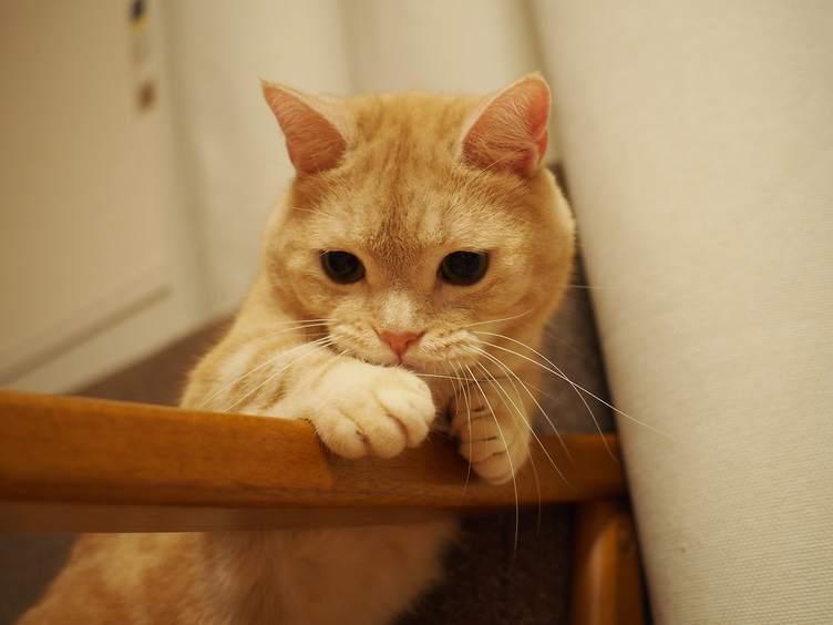 春「ねこ休み展」が名古屋に🌸 愛猫🐱が誌面に登場するチャンスも