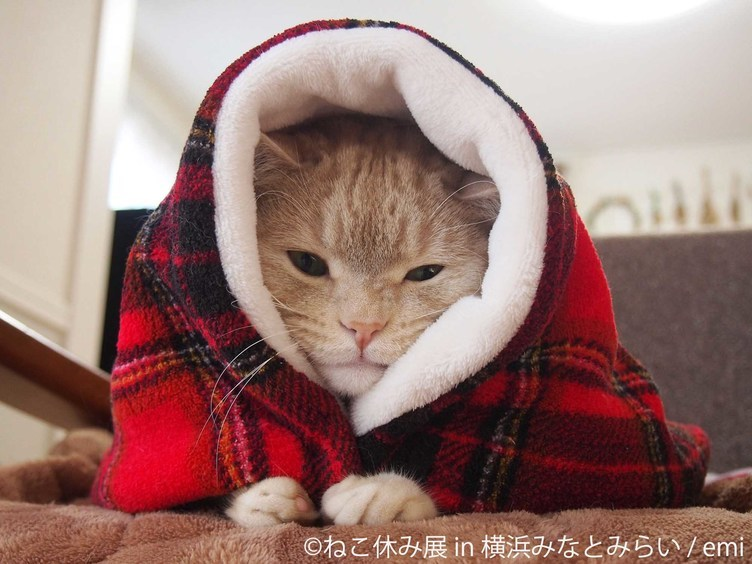 「ねこ休み展」聖なる夜もニャンたちに癒される🐾 冬の横浜に再来