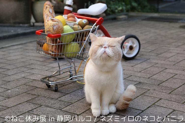「ねこ休み展」静岡パルコに凱旋 ネコと一緒に春が来るニャ🐾