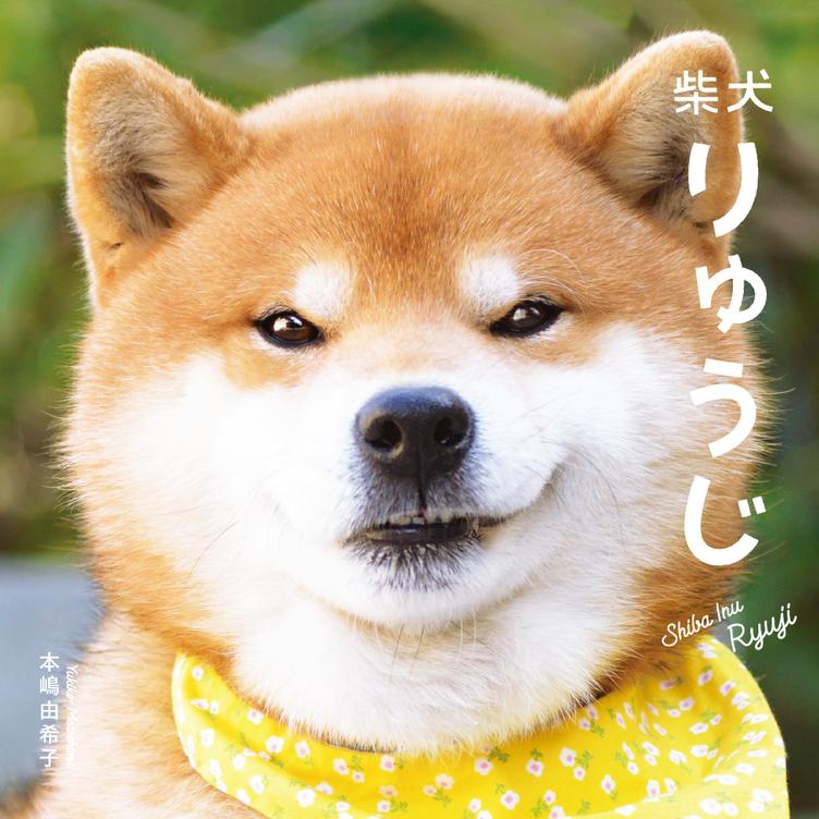 柴犬りゅうじの初写真集 愛嬌たっぷりの表情にノックアウト